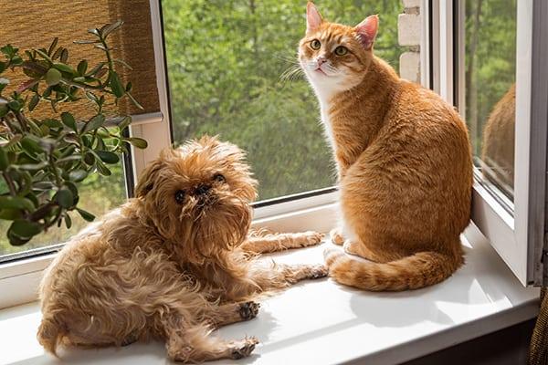 York Professional Pet Sitting and Dog Walking | Newmarket