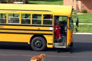 Back to school Doggie Blues