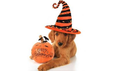 10 Easy Tips To Make Halloween Safe For Your Pets