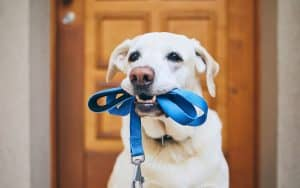 Why individual on leash walks are best for your pooch.