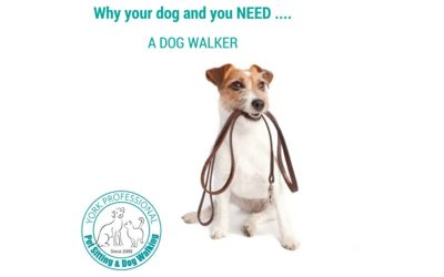 Why you and your dog need a dog walker.