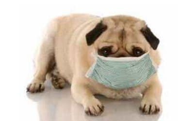 Can dogs catch my cold?