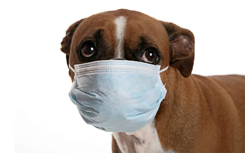 Your pet CAN get the flu from you