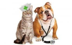 Coronavirus and your pets