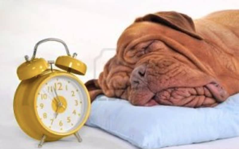 SPRING FORWARD?  Fido and Fluffy can't tell time!