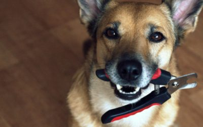 10 Easy Tips to Help Trim Your Pet's Nails