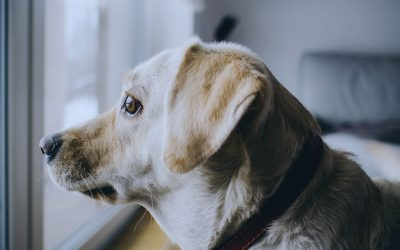 How to help your dog avoid separation anxiety when you return to work