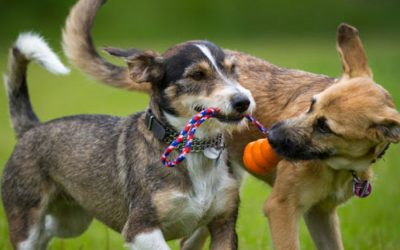 4 Ways to Socialize Your Dog in a Locked Down World