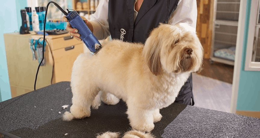 Tips to help you clip, brush and trim your pet at home