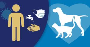 York Professional Pet Sitting & Dog Walking Covid-19 Operational Update