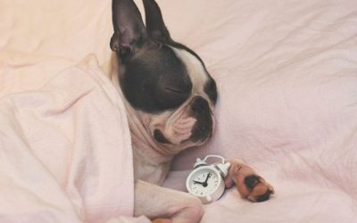 5 things to do for your pet BEFORE the clocks go back