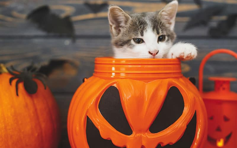 Pet Safety for Halloween