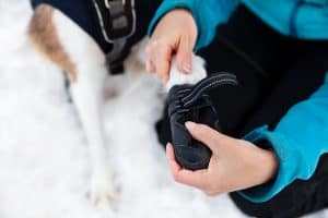 Winter Paw Safety