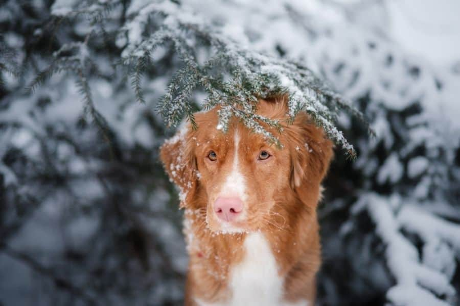 How to Prevent Hypothermia in Dogs