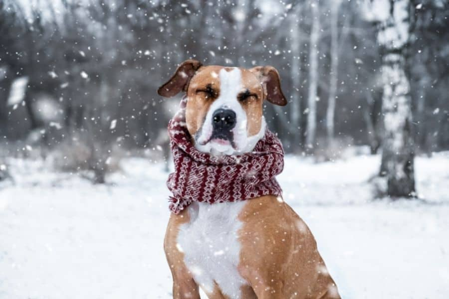 to Prevent Hypothermia in Dogs