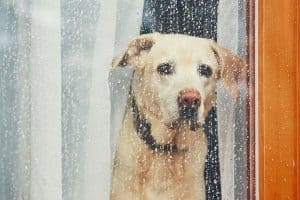 Five Rainy Day Essentials for Walking Your Pup