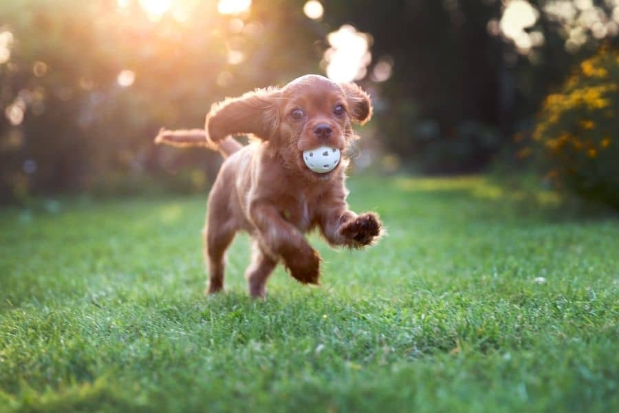 Is My Puppy Crazy?!  Puppy Behaviours That Are Actually Normal!