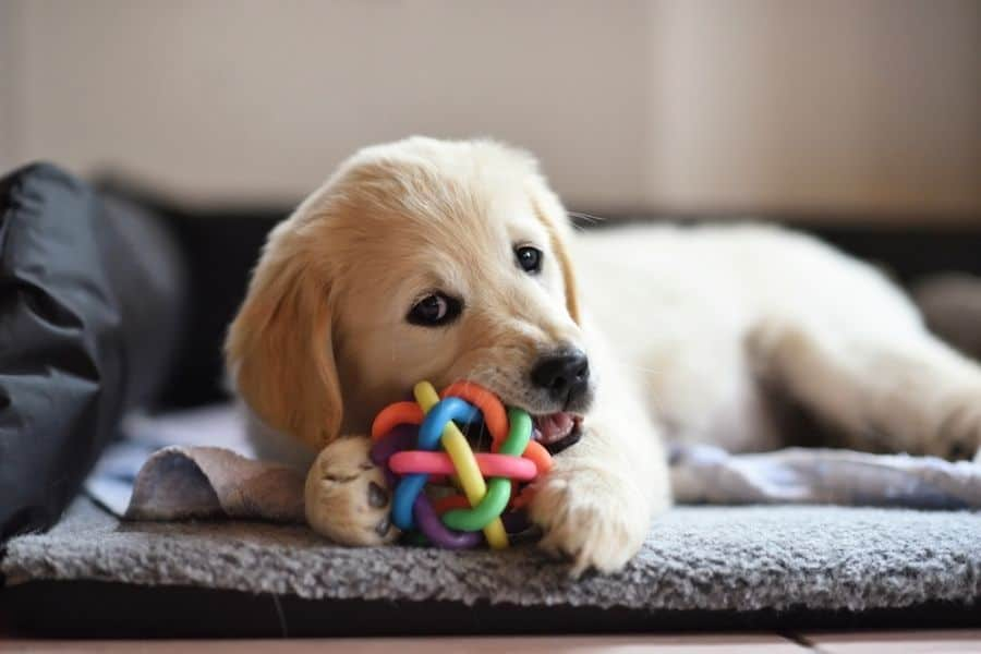_ Puppy Behaviours That Are Actually Normal!
