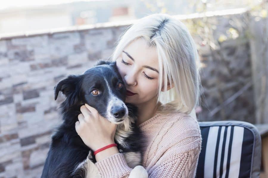 When Hiring a Professional Pet Sitter or Dog Walker