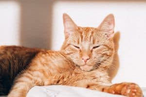 How to Choose the Perfect Rescue Cat for Your Family