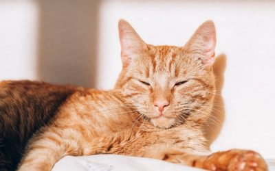 How to Choose the Perfect Rescue Cat for Your Family in Aurora and Newmarket