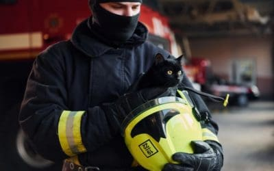 The Importance of a Pet Emergency Plan For Your Aurora and Newmarket Pets