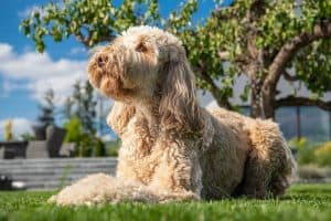 How to Prevent Heat Exhaustion In Dogs