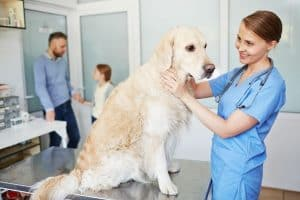 Seizures In Pets What To Do & How To Help