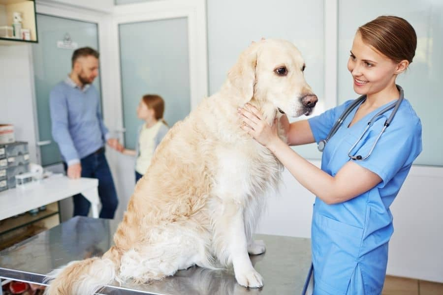 Seizures In Pets: What To Do & How To Help