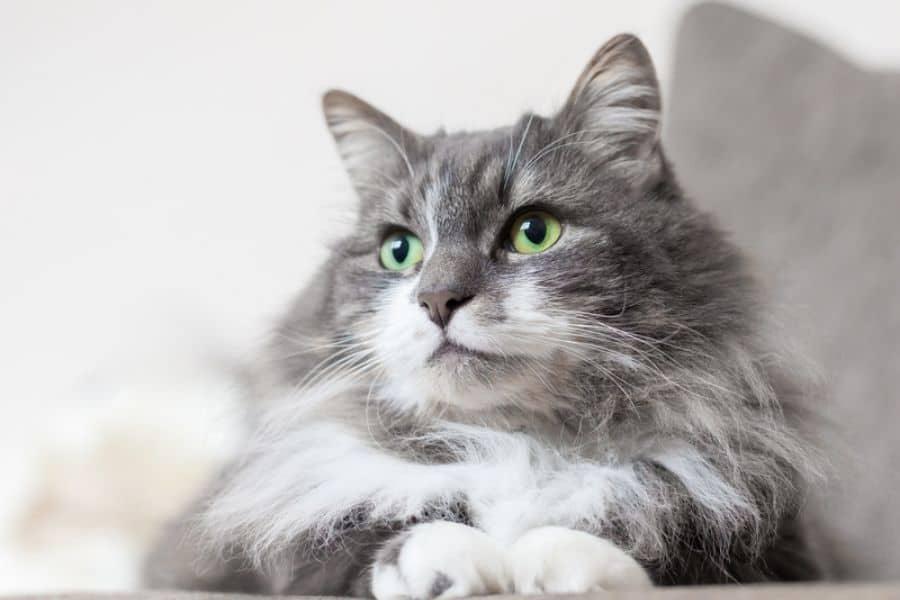 Celebrate International Cat Day In Aurora and Newmarket!