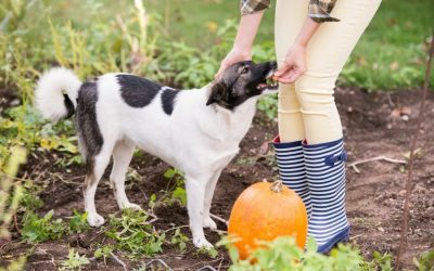 Benefits of Pumpkin For Your Aurora and Newmarket Pet