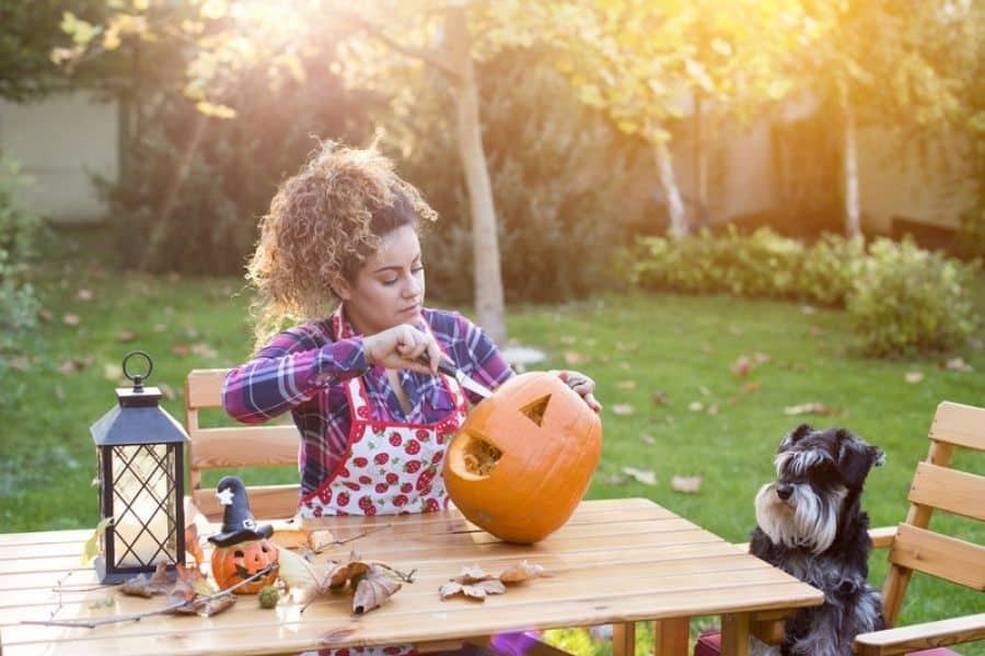 Pumpkin For Your Aurora and Newmarket Pet