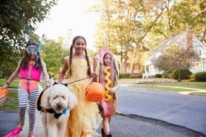 How To Introduce Halloween Costumes To Your Aurora and Newmarket pets!